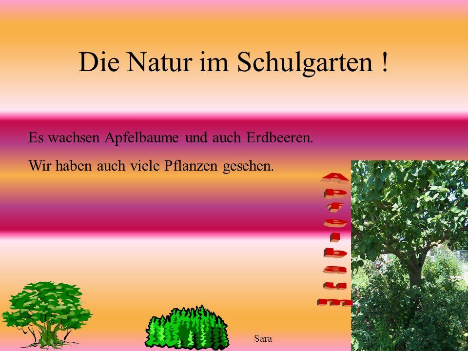 Die Natur im Schulgarten !