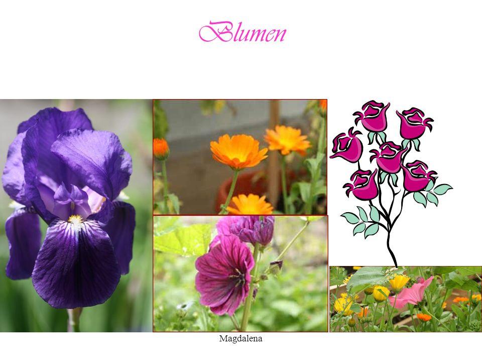 Blumen Magdalena