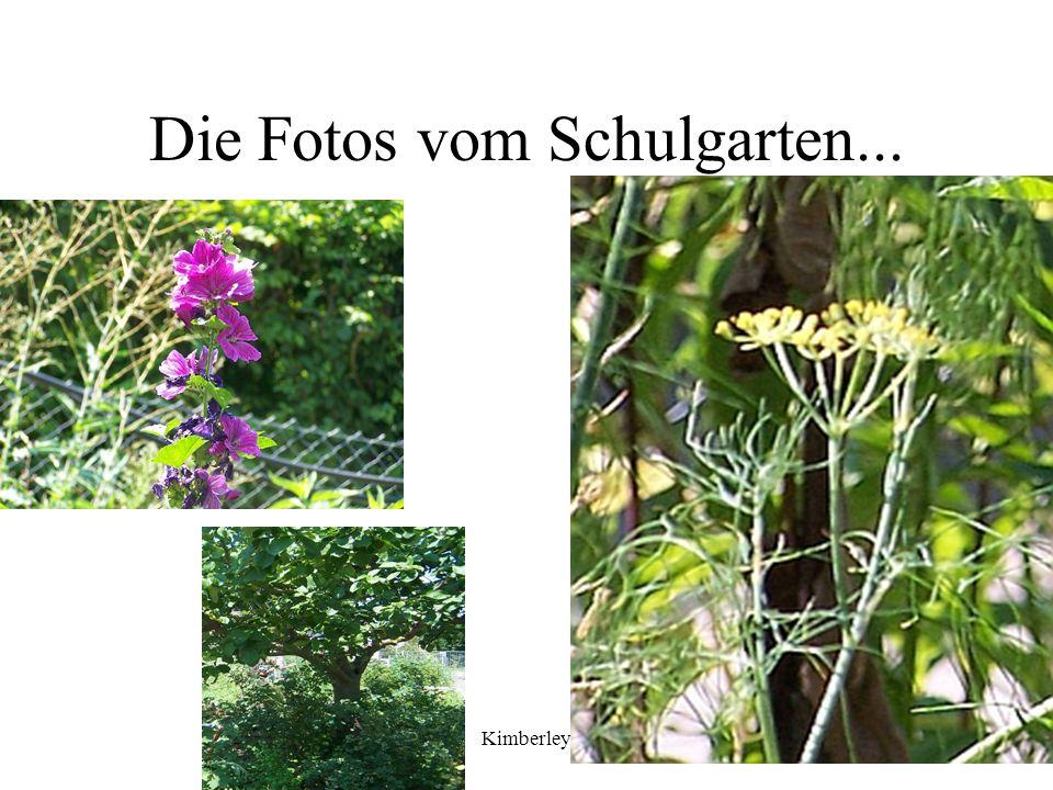 Die Fotos vom Schulgarten...