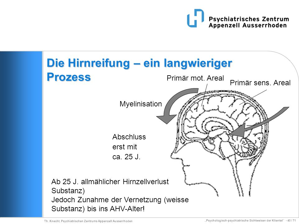 Die Hirnreifung – ein langwieriger Prozess