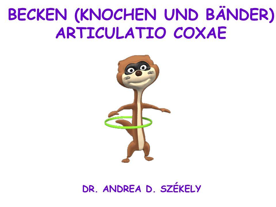 BECKEN (KNOCHEN UND BÄNDER) - ppt video online herunterladen