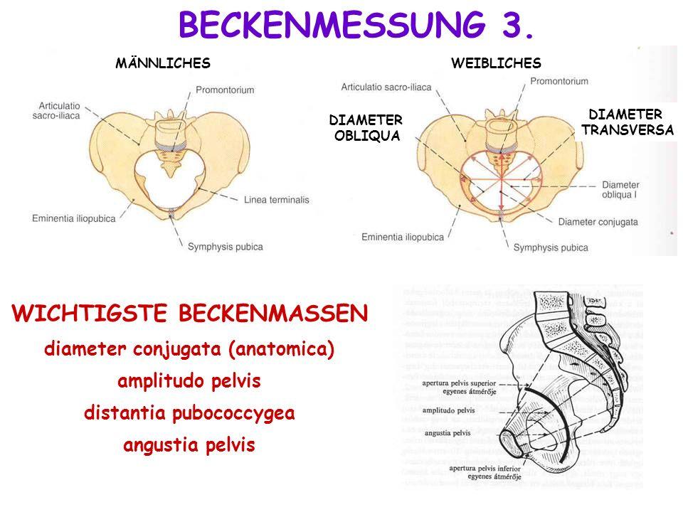 BECKENMESSUNG 3. WICHTIGSTE BECKENMASSEN