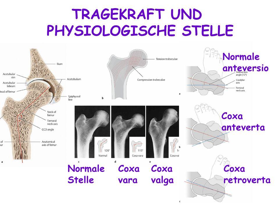 PHYSIOLOGISCHE STELLE