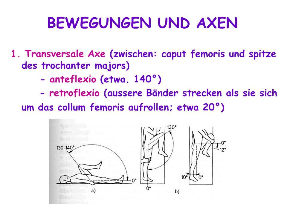 BEWEGUNGEN UND AXEN 1. Transversale Axe (zwischen: caput femoris und spitze des trochanter majors) - anteflexio (etwa. 140°)