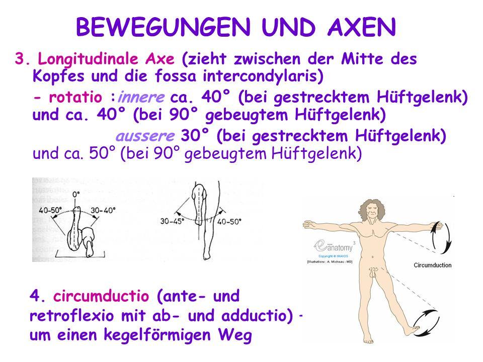 BEWEGUNGEN UND AXEN 3. Longitudinale Axe (zieht zwischen der Mitte des Kopfes und die fossa intercondylaris)
