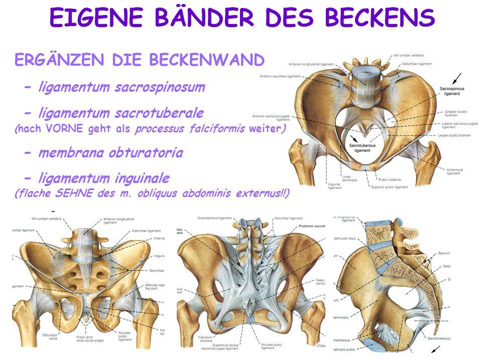Großzügig Knöchernen Becken Anatomie Bilder - Menschliche Anatomie ...
