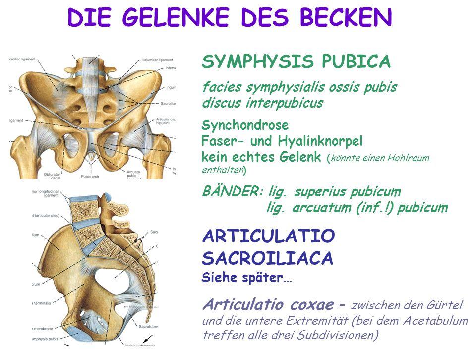 Beste Becken Hüftanatomie Galerie - Anatomie Von Menschlichen ...