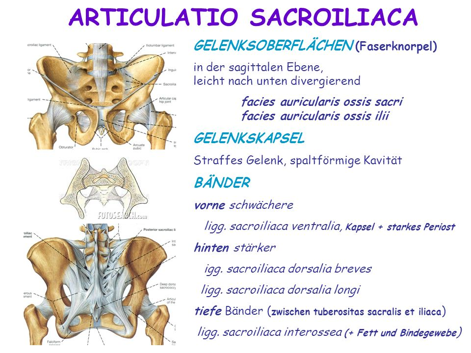 ARTICULATIO SACROILIACA