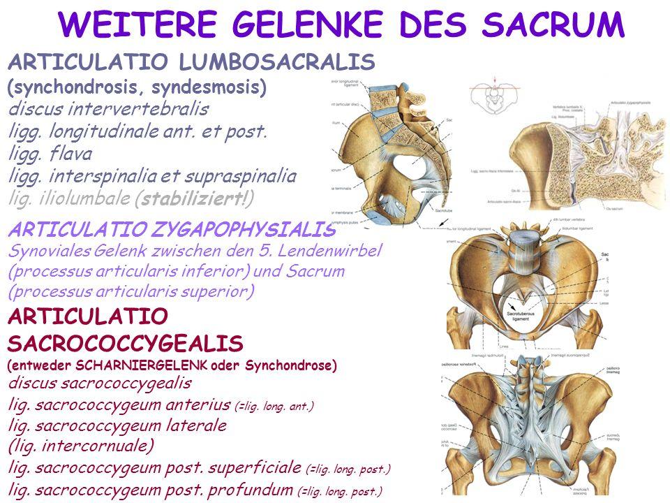 Fantastisch Sacrum Bereich Galerie - Anatomie Von Menschlichen ...
