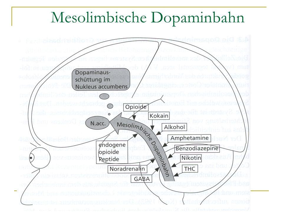 Mesolimbische Dopaminbahn