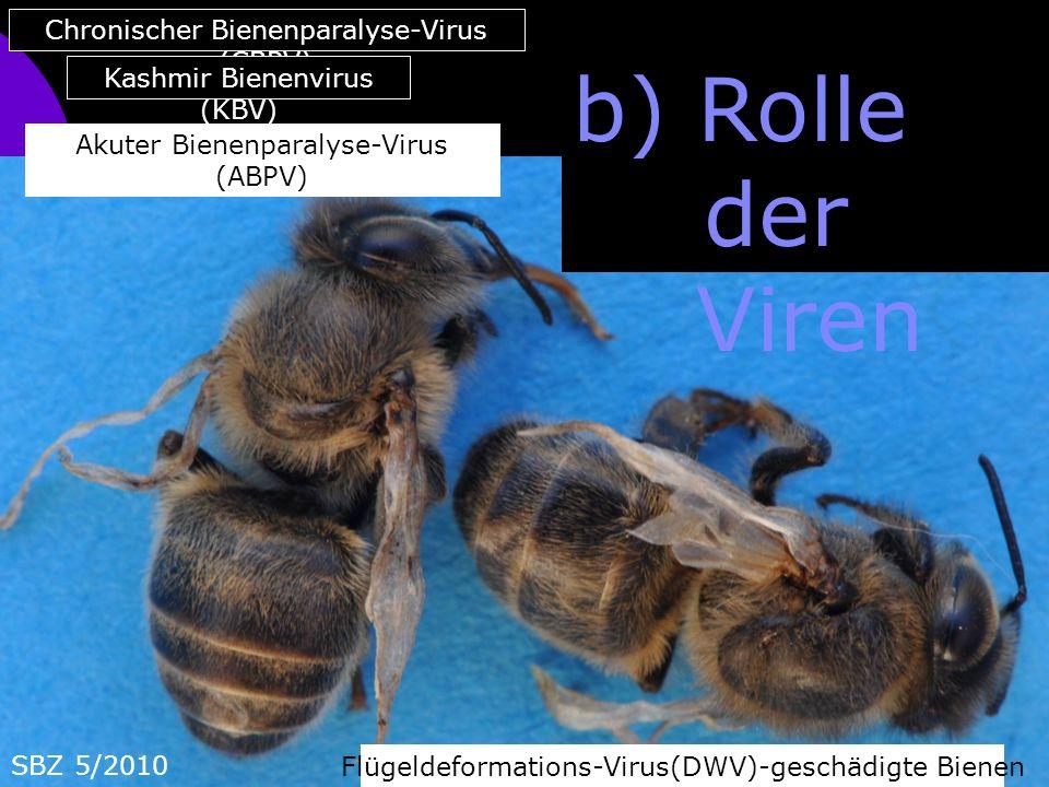 b) Rolle der Viren Chronischer Bienenparalyse-Virus (CBPV)