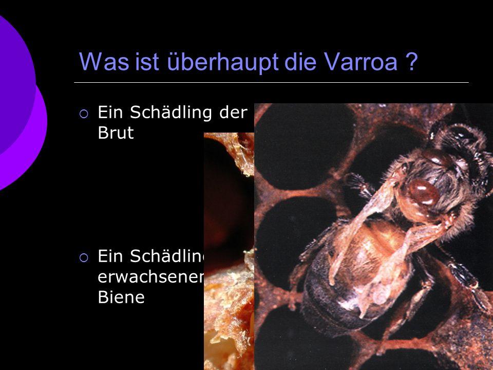 Was ist überhaupt die Varroa