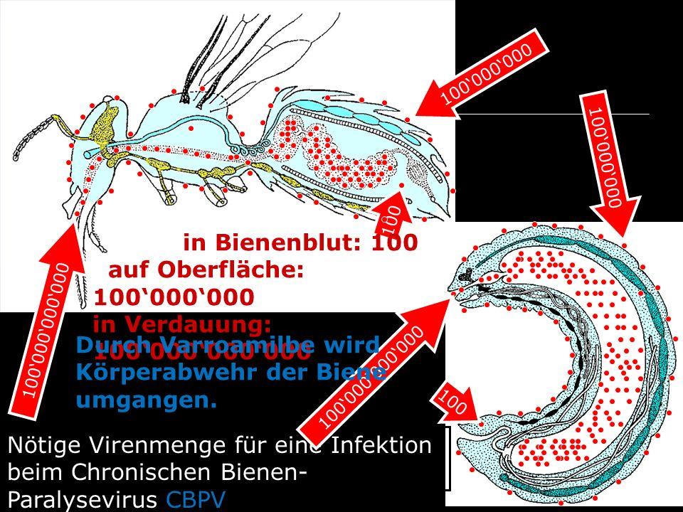auf Oberfläche: 100'000'000 in Verdauung: 100'000'000'000