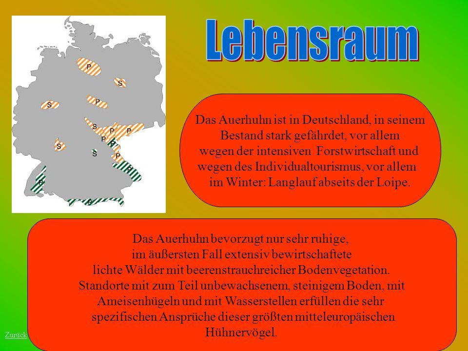 Lebensraum Das Auerhuhn ist in Deutschland, in seinem