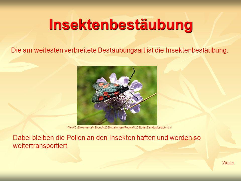 Insektenbestäubung Die am weitesten verbreitete Bestäubungsart ist die Insektenbestäubung.