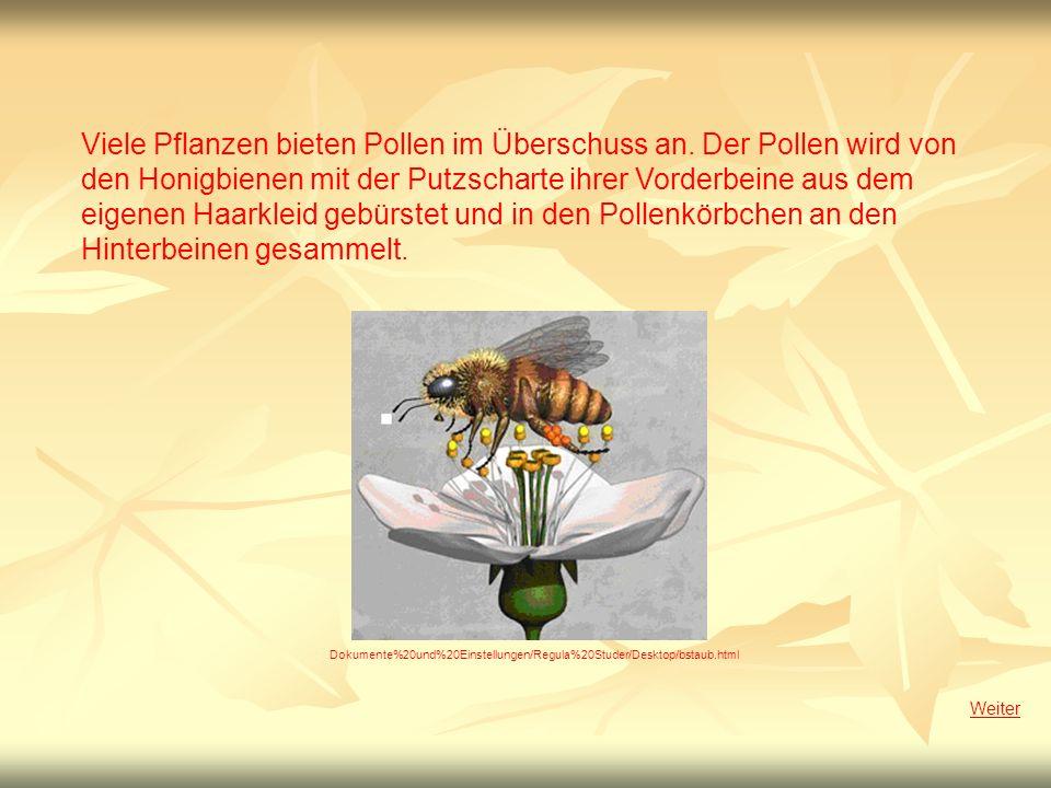 Viele Pflanzen bieten Pollen im Überschuss an