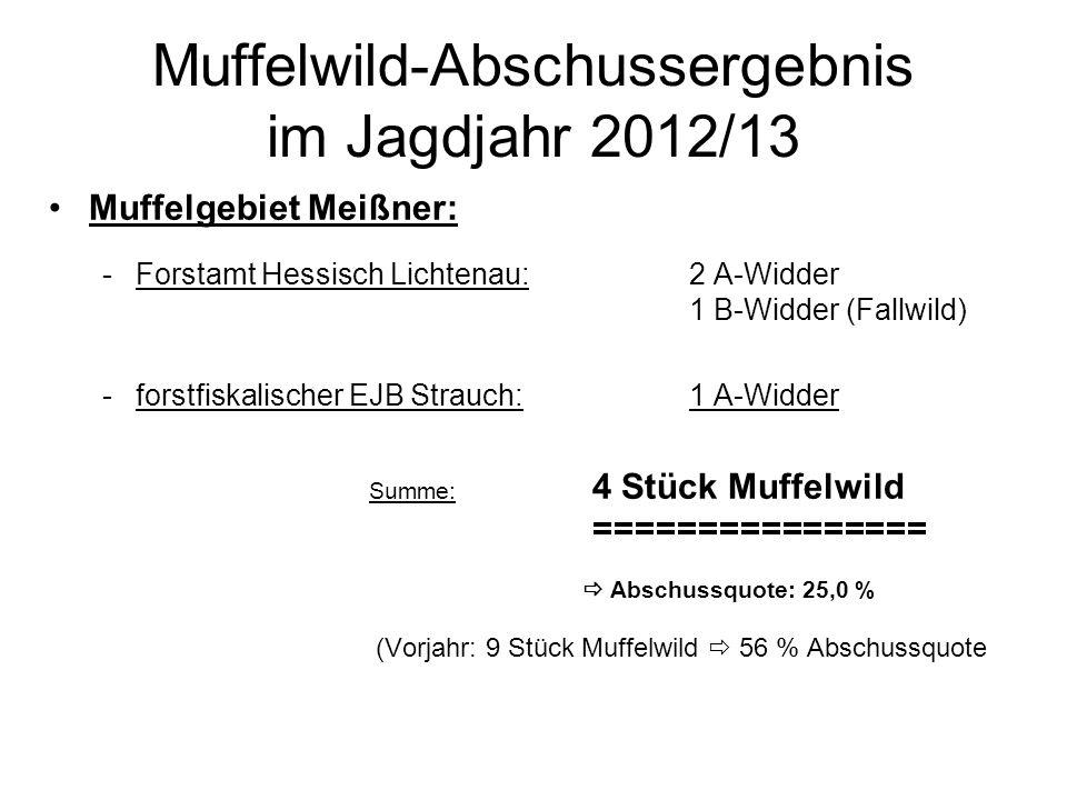 Muffelwild-Abschussergebnis im Jagdjahr 2012/13