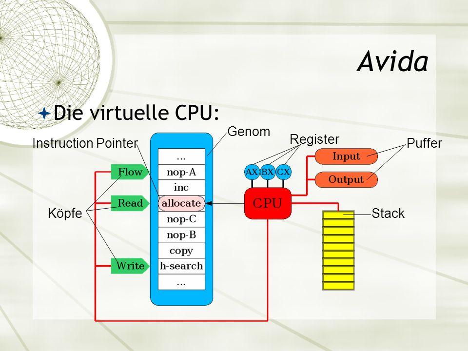 Avida Die virtuelle CPU: Genom Register Instruction Pointer Puffer