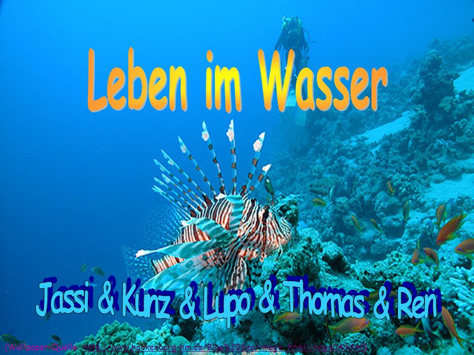 Jassi & Kunz & Lupo & Thomas & Ren