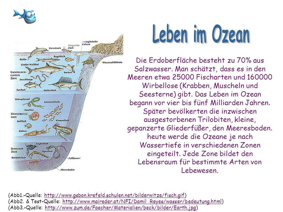 Leben im Ozean