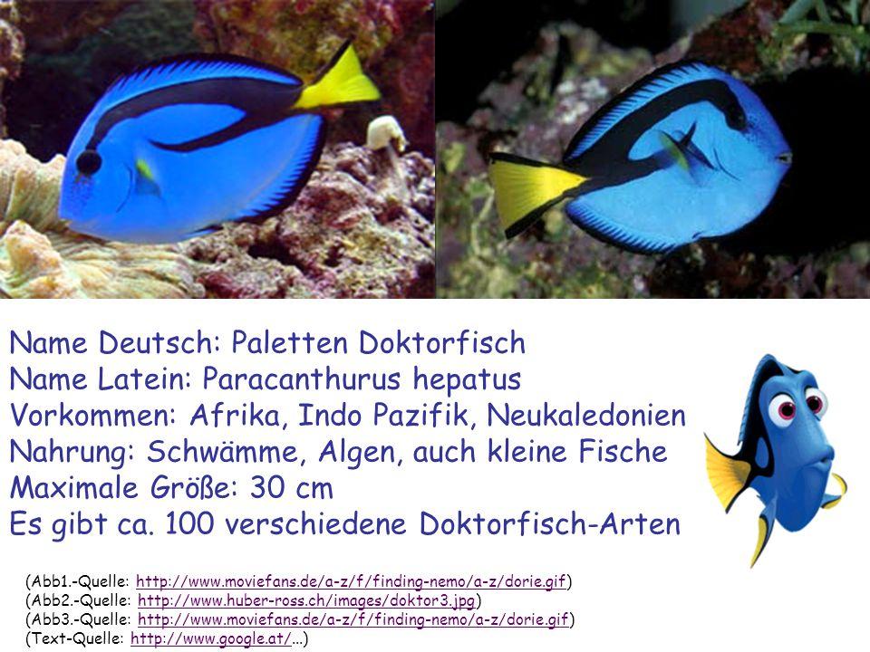 Name Deutsch: Paletten Doktorfisch Name Latein: Paracanthurus hepatus