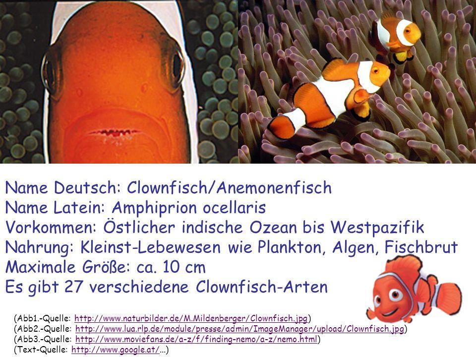 Name Deutsch: Clownfisch/Anemonenfisch