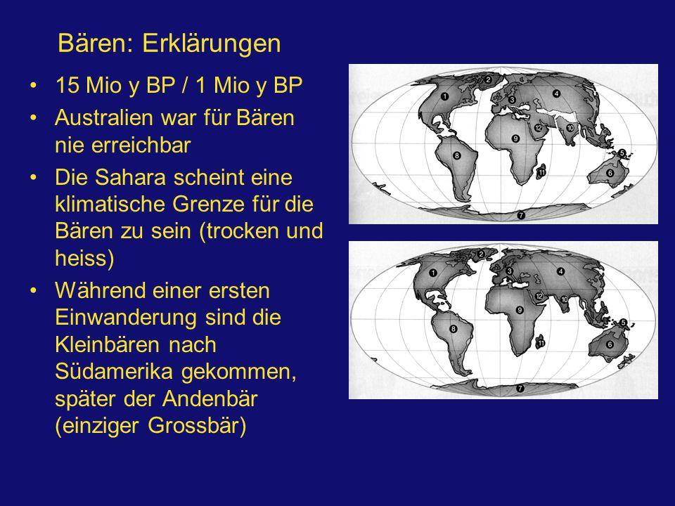 Bären: Erklärungen 15 Mio y BP / 1 Mio y BP