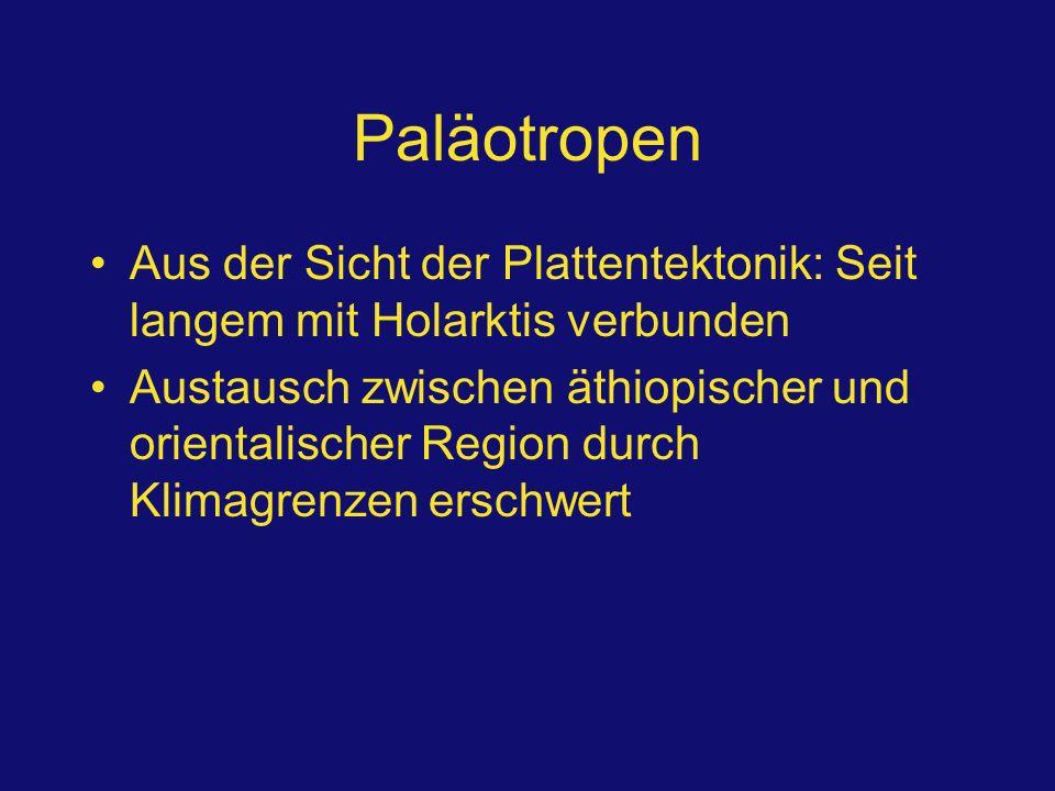 Paläotropen Aus der Sicht der Plattentektonik: Seit langem mit Holarktis verbunden.