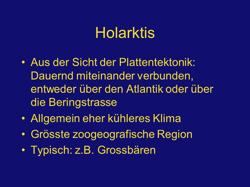 Holarktis Aus der Sicht der Plattentektonik: Dauernd miteinander verbunden, entweder über den Atlantik oder über die Beringstrasse.