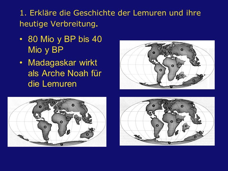 1. Erkläre die Geschichte der Lemuren und ihre heutige Verbreitung.