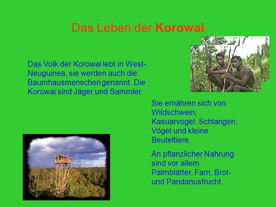 Das Leben der Korowai