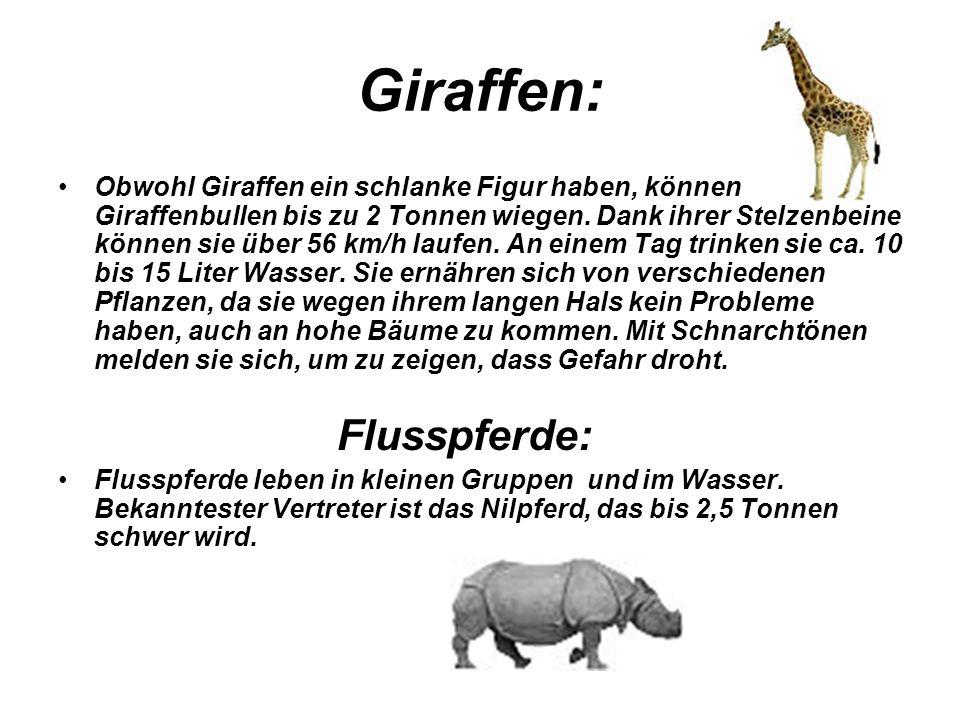 Giraffen: Flusspferde: