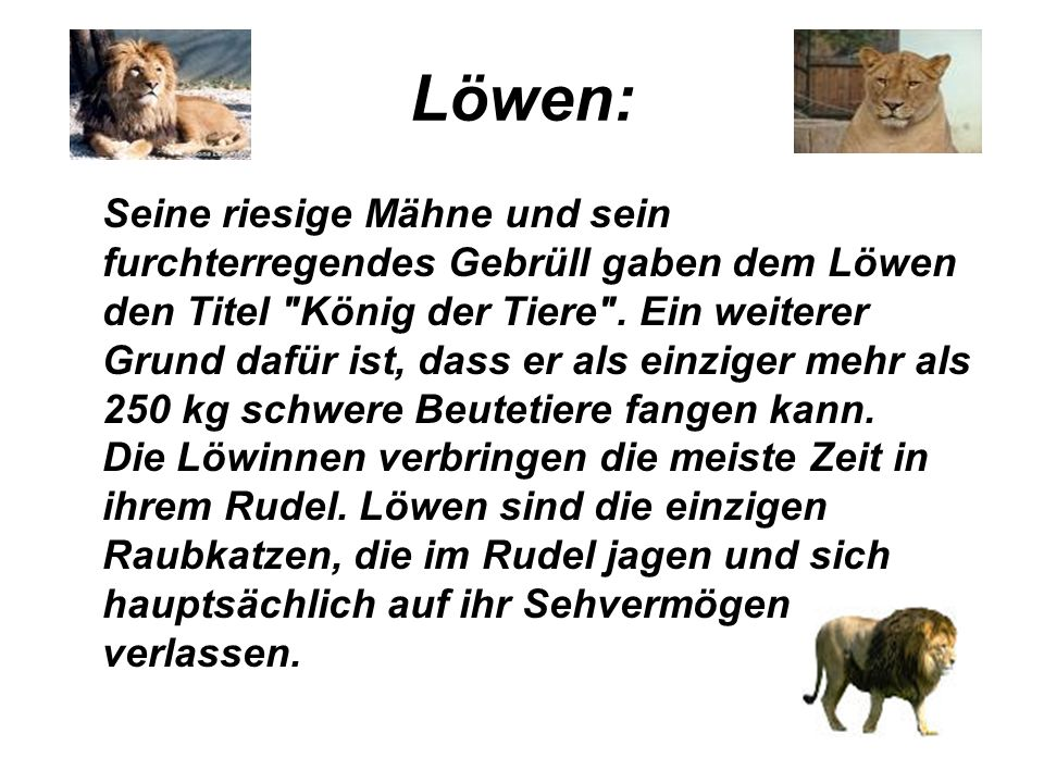 Löwen:
