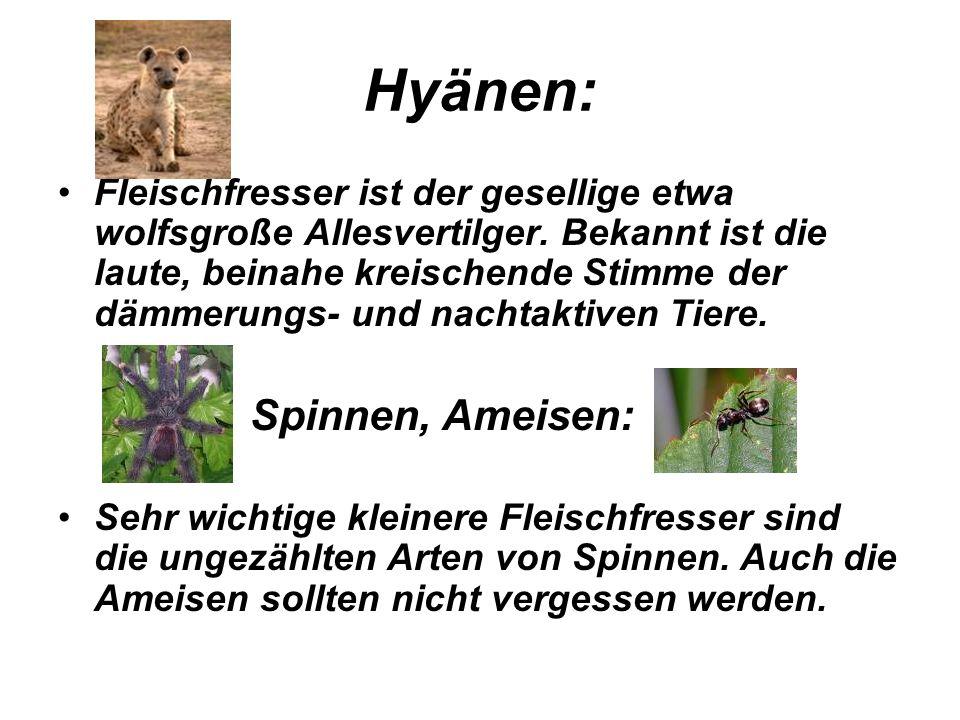 Hyänen: Spinnen, Ameisen: