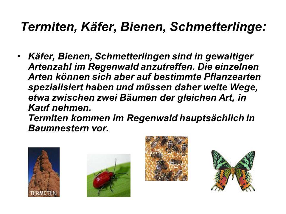 Termiten, Käfer, Bienen, Schmetterlinge: