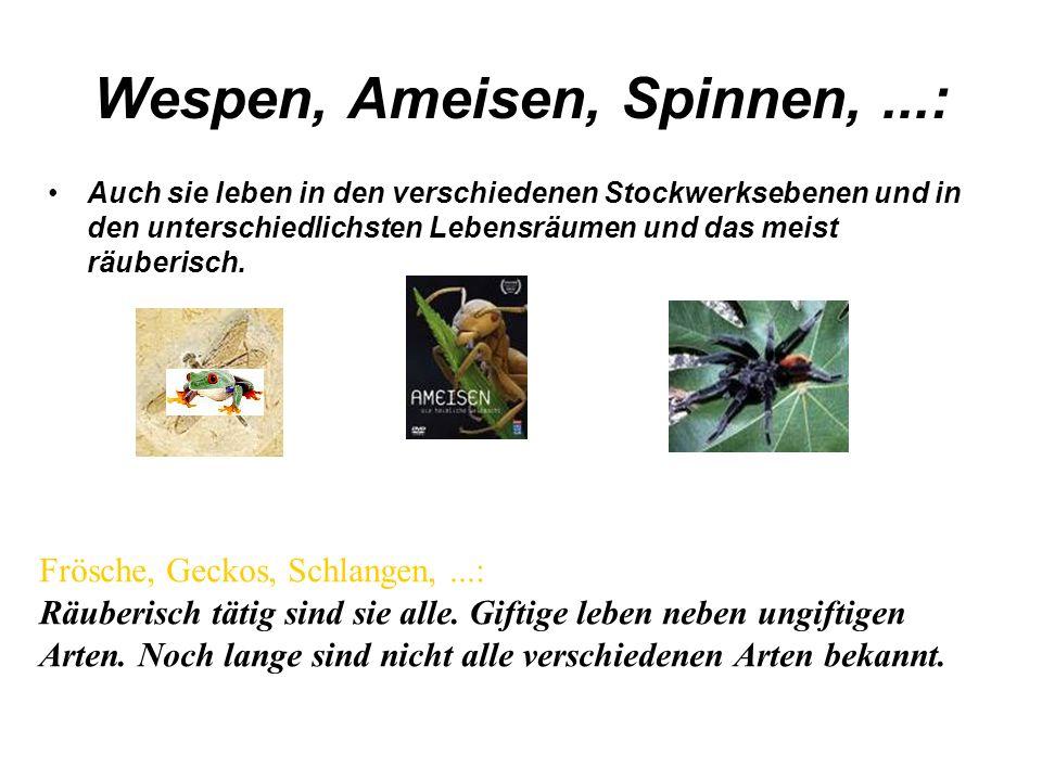 Wespen, Ameisen, Spinnen, ...: