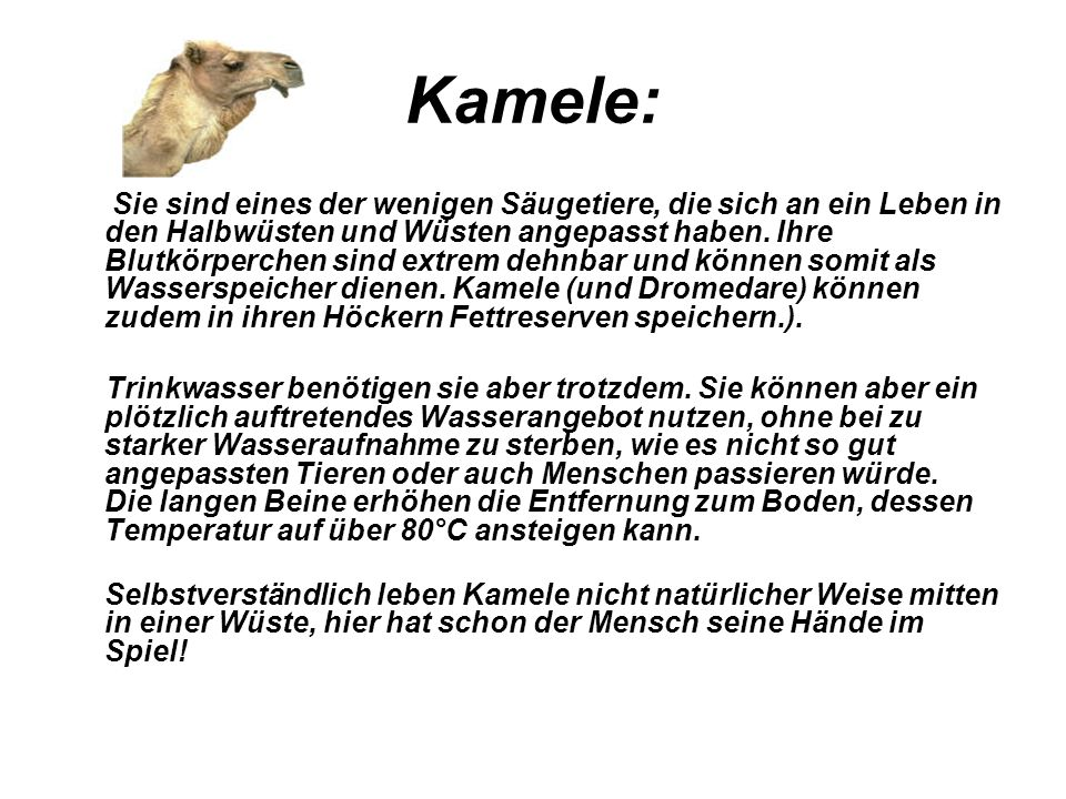 Kamele: