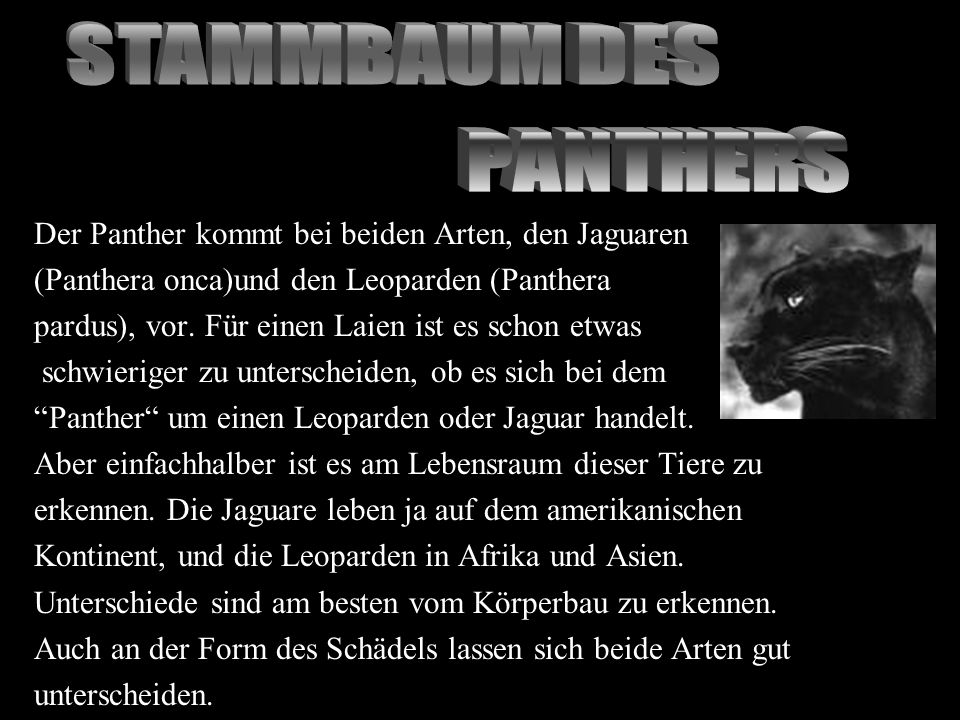STAMMBAUM DES PANTHERS