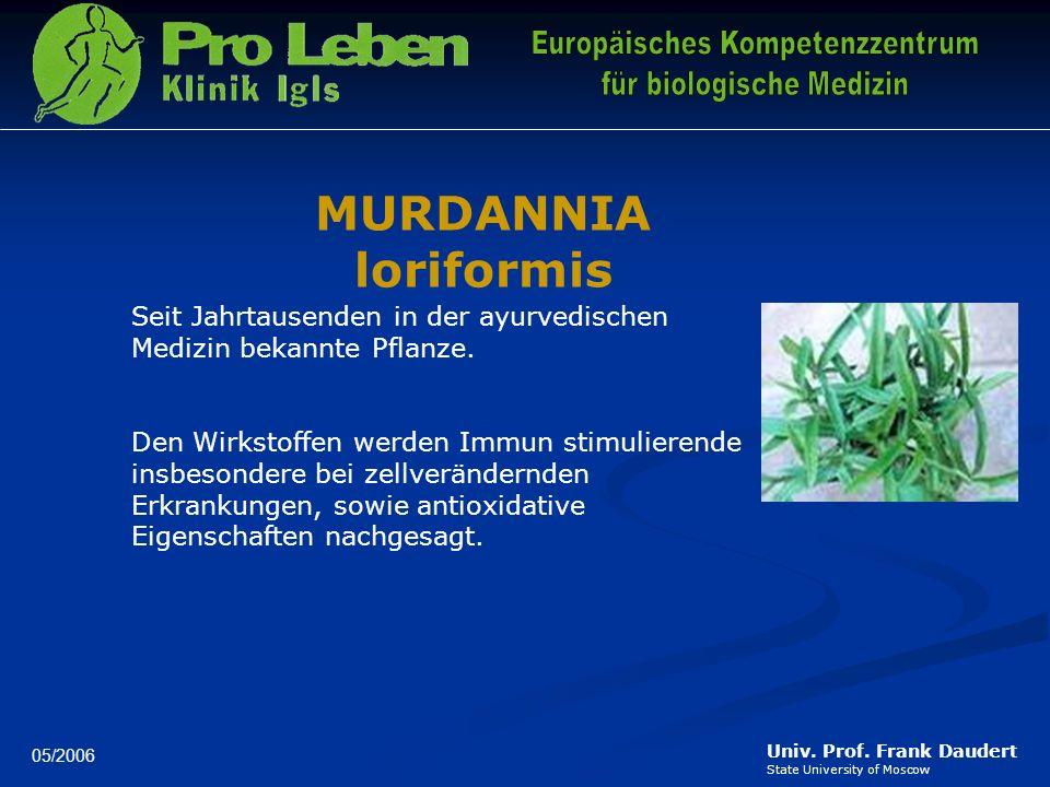 MURDANNIA loriformis Seit Jahrtausenden in der ayurvedischen Medizin bekannte Pflanze.