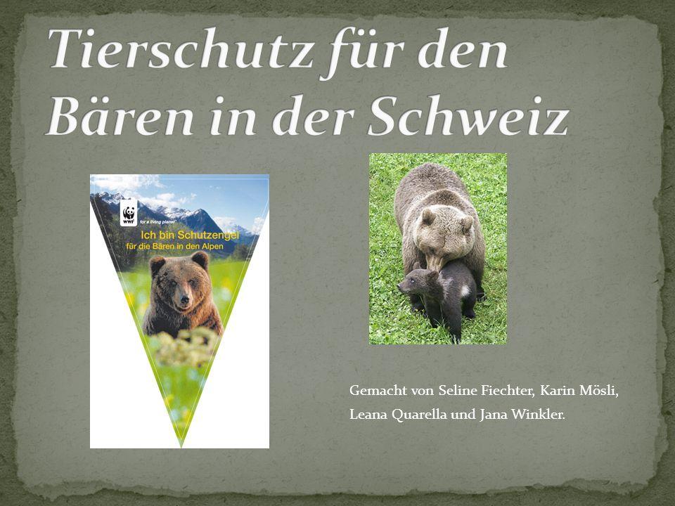 Tierschutz für den Bären in der Schweiz