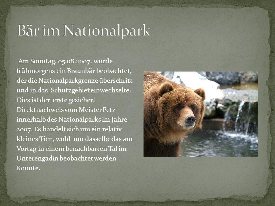 Bär im Nationalpark