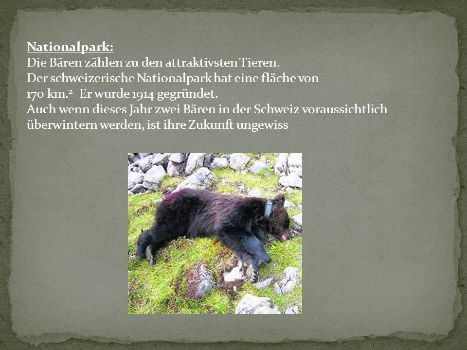 Nationalpark: Die Bären zählen zu den attraktivsten Tieren