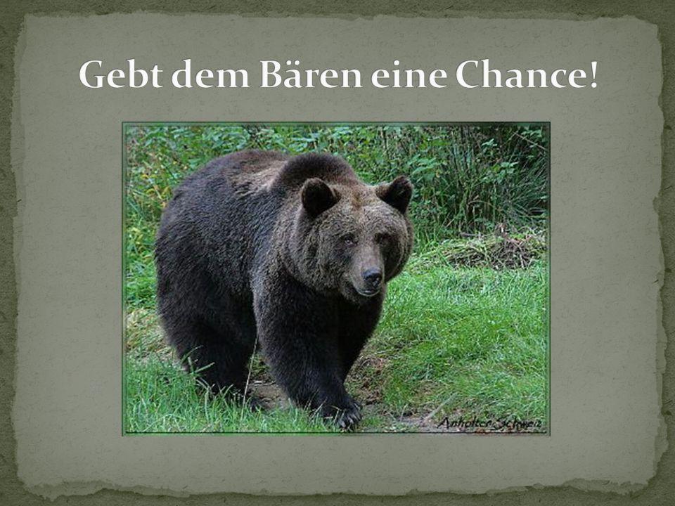Gebt dem Bären eine Chance!