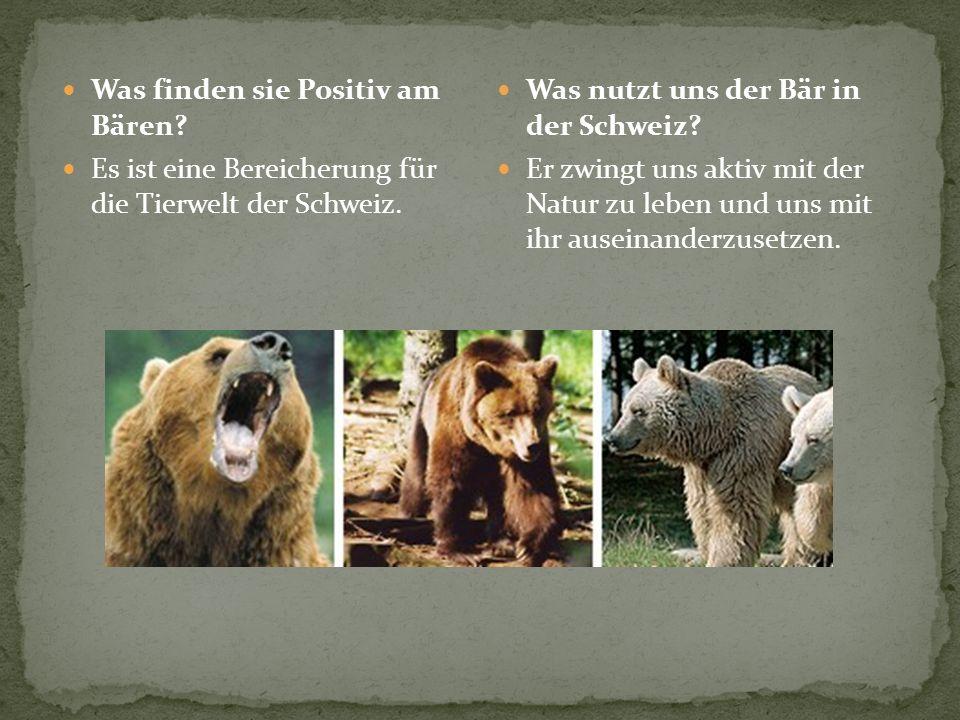 Was finden sie Positiv am Bären