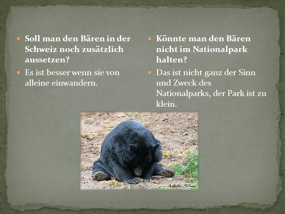 Soll man den Bären in der Schweiz noch zusätzlich aussetzen