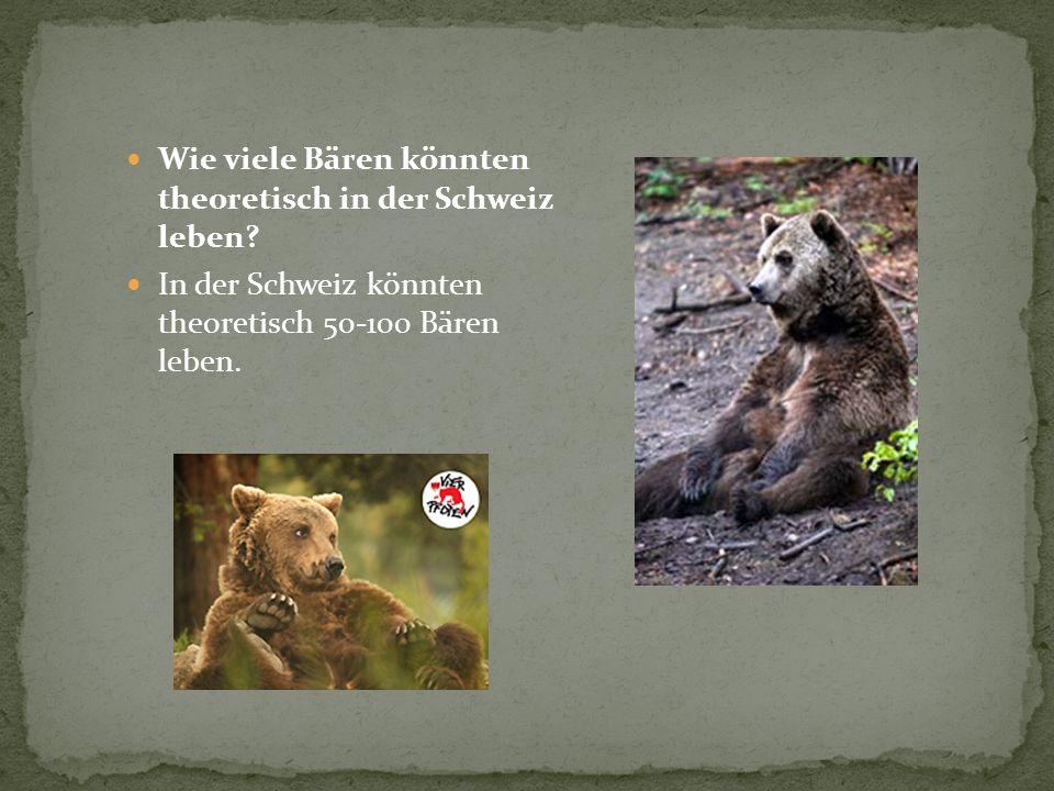 Wie viele Bären könnten theoretisch in der Schweiz leben