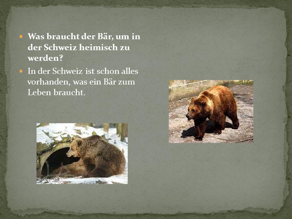 Was braucht der Bär, um in der Schweiz heimisch zu werden