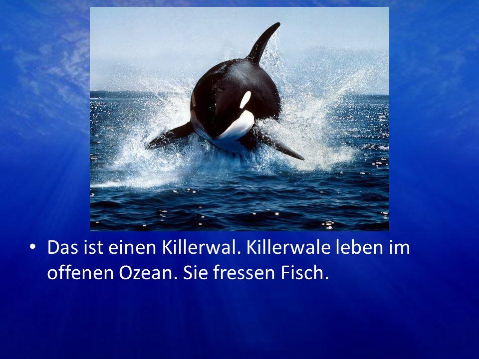 Das ist einen Killerwal. Killerwale leben im offenen Ozean