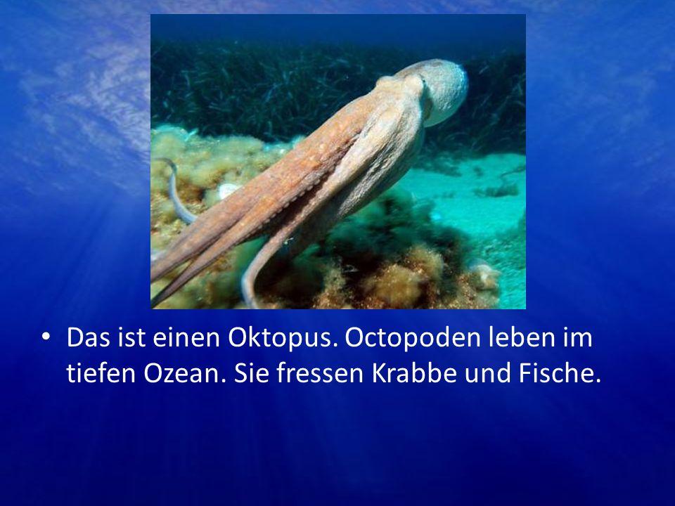 Das ist einen Oktopus. Octopoden leben im tiefen Ozean