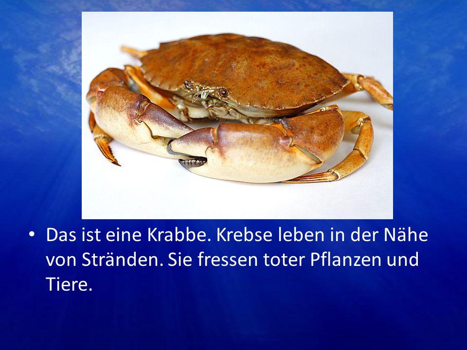 Das ist eine Krabbe. Krebse leben in der Nähe von Stränden